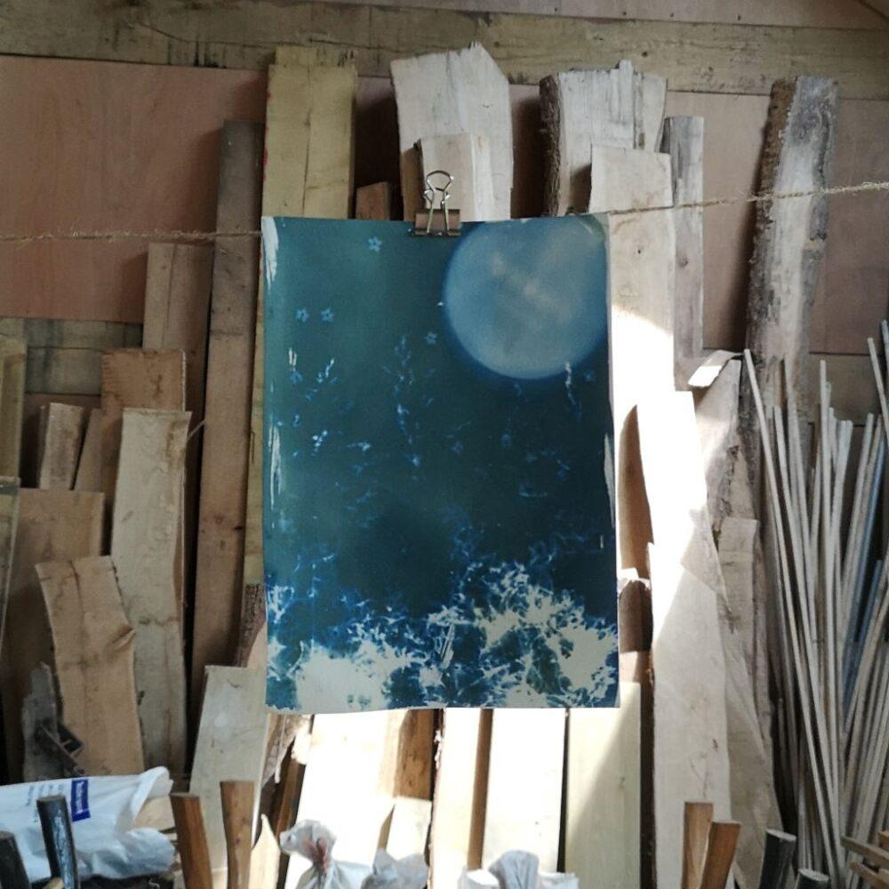 Cyanotype Printing: Pen Y Graig Woodland Flora